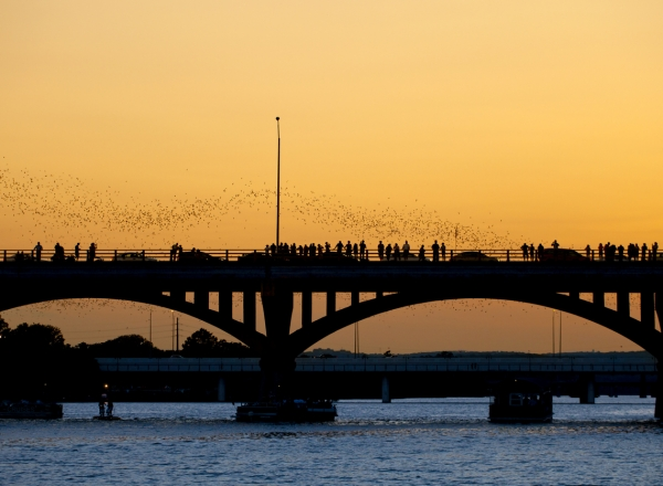 Austin Bats under Congress Avenue Bridge