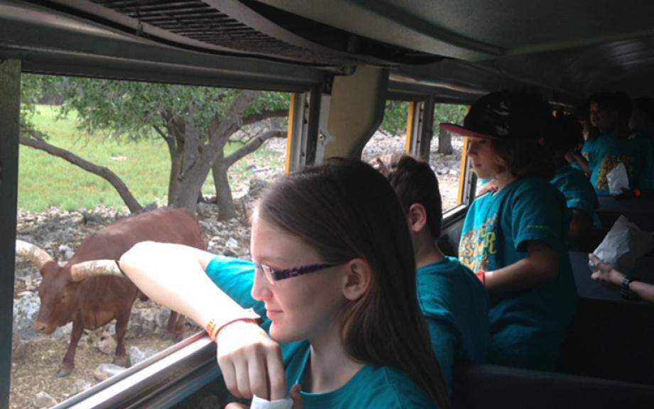 Children looking outside the bus window at animals on a field trip to a safari park
